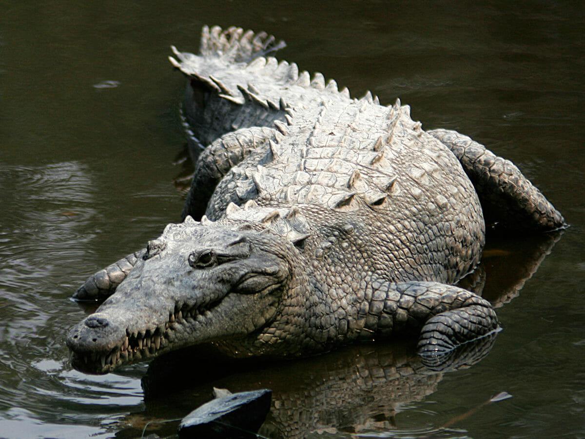 Everglades genopretning