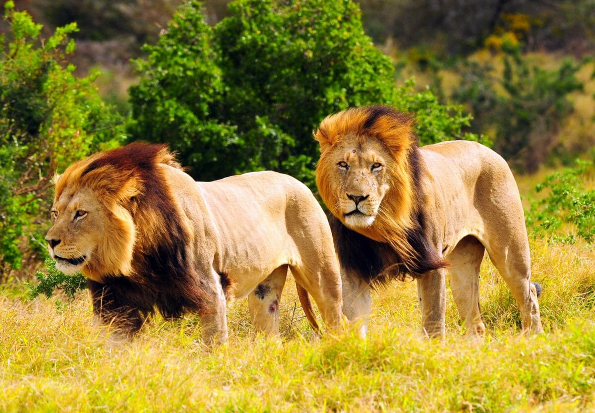Nye muligheder for Afrika-rejser