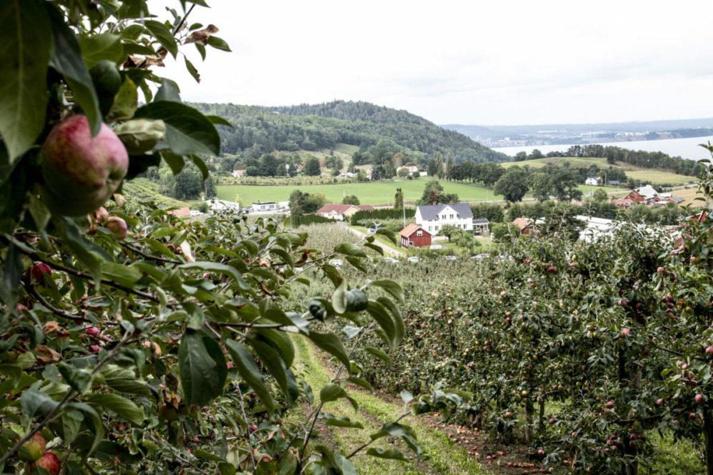 Området, hvor æbleplantagerne skråner ned mod Sveriges næststørst sø, Vättern, går også under navnet Sveriges Toscana