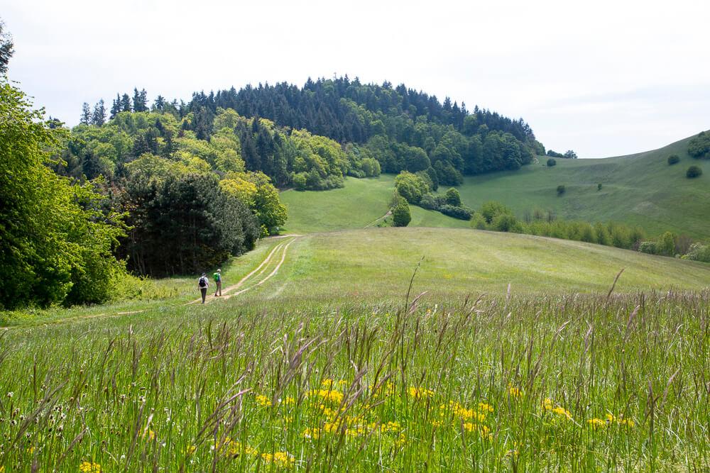 Turen ad Kaiserstuhlpfad over den vulkanske bjergryg er i sandhed en kejserlig vandring