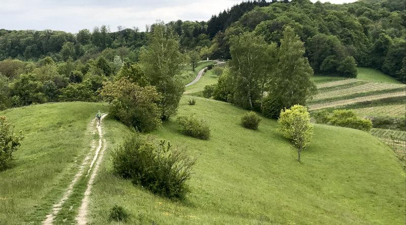 Kaisrstuhl er bløde bakker, med vinmarker, skove og eng