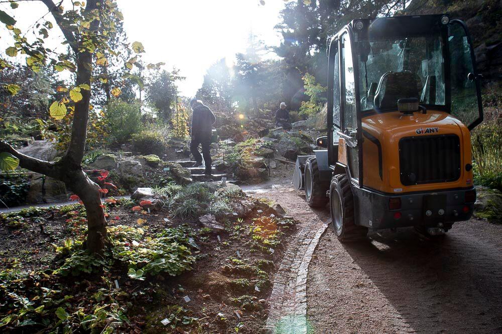 Efterårsarbejde i Göteborgs botaniske have
