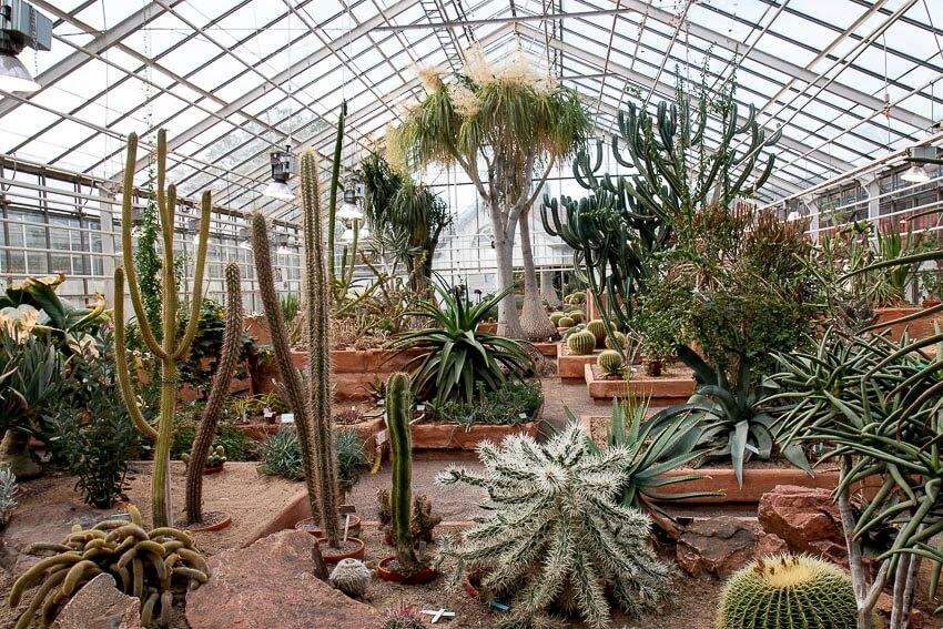 Kaktus findes i både små og store udgaver