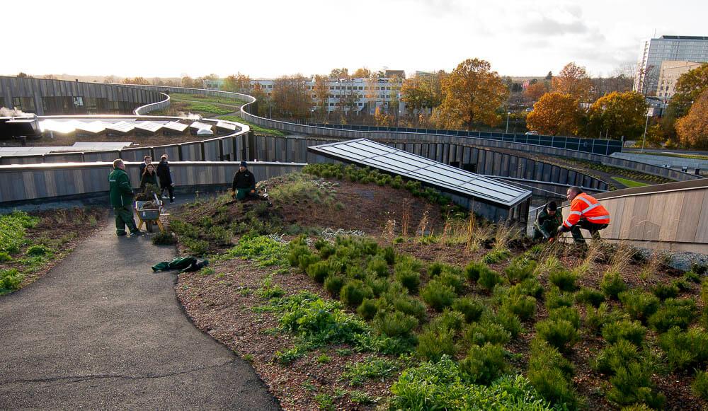 Basecamp Skovbrynet er et nyt boligbyggeri i Sorgenfri med stier og haver på taget